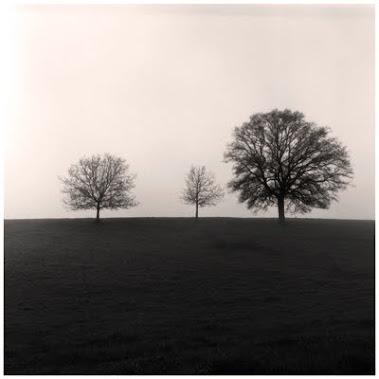 Trois arbres...