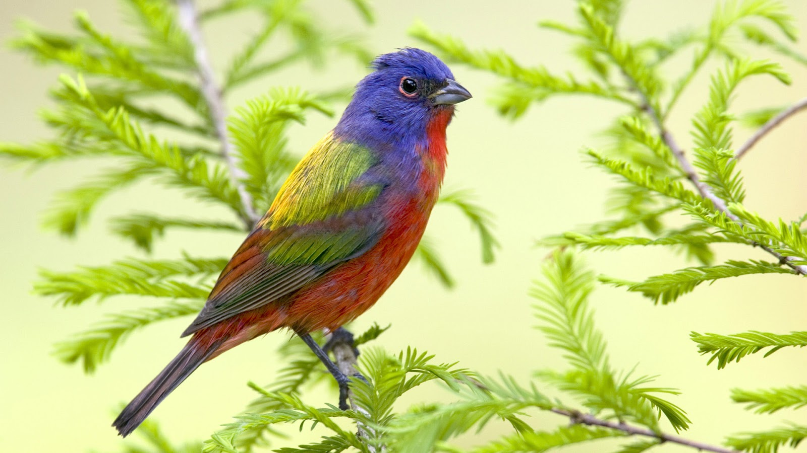 Beautiful Wallpapers For Desktop Birds HD