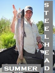 summer steelhead