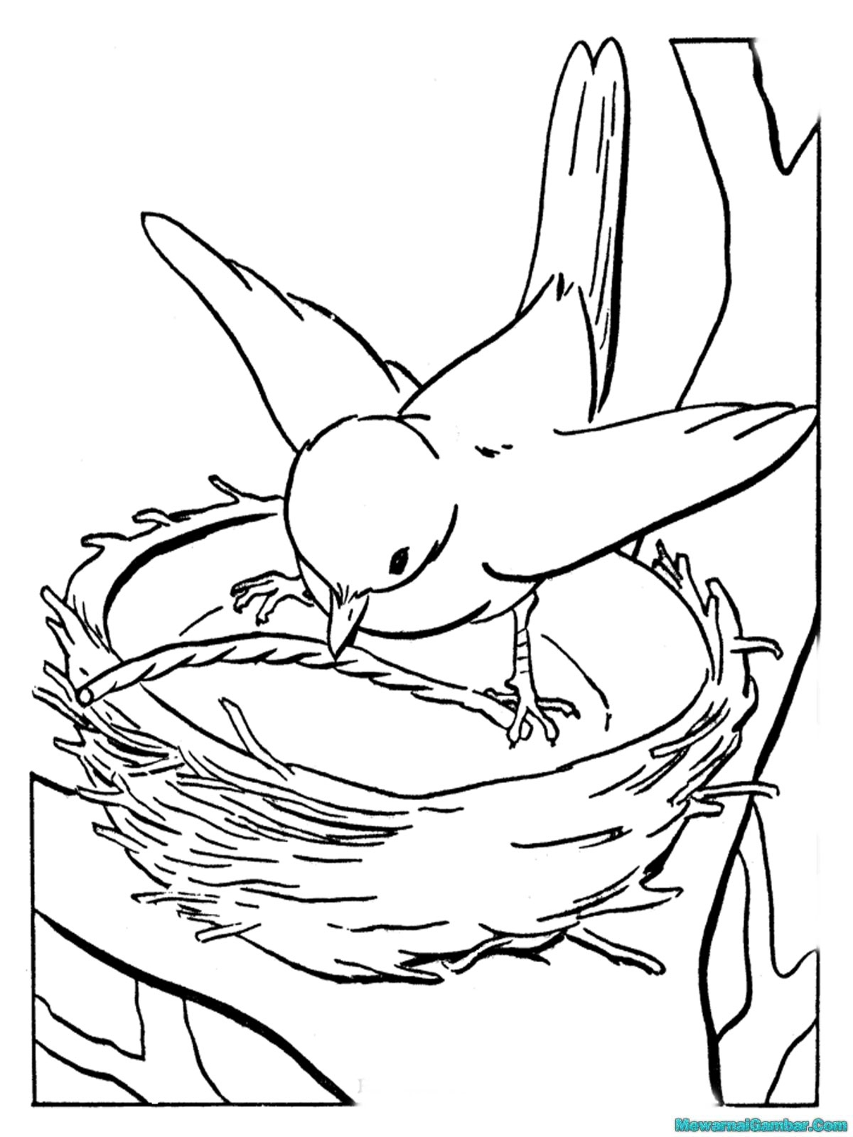 Mewarnai Gambar Burung Sedang Membuat Sarang Untuk Bertelur