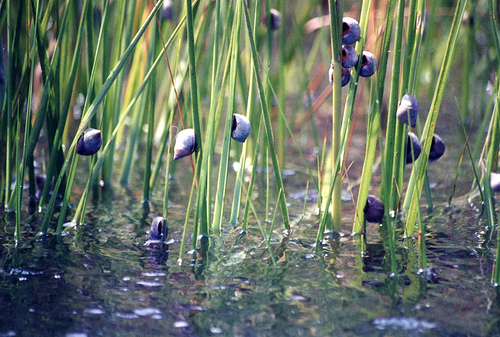 Snails on grass