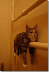 cat on towel drier, Cold season starts, cats need heating