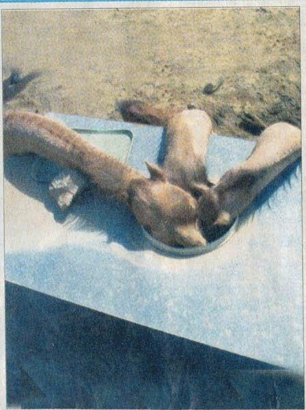مؤلم جداً : لن تصدق كيف ماتت هذه الجمال وما سبب موتها !!
