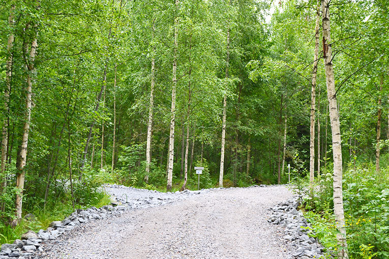 Travel, Finland, Savonranta, forest, vegetation