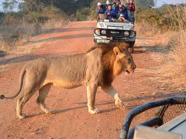 Tops 5 des Destinations en Afrique pour un safari