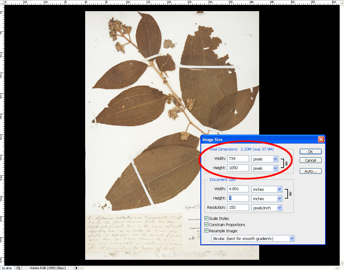 how to change pixel size of image in powerpoint