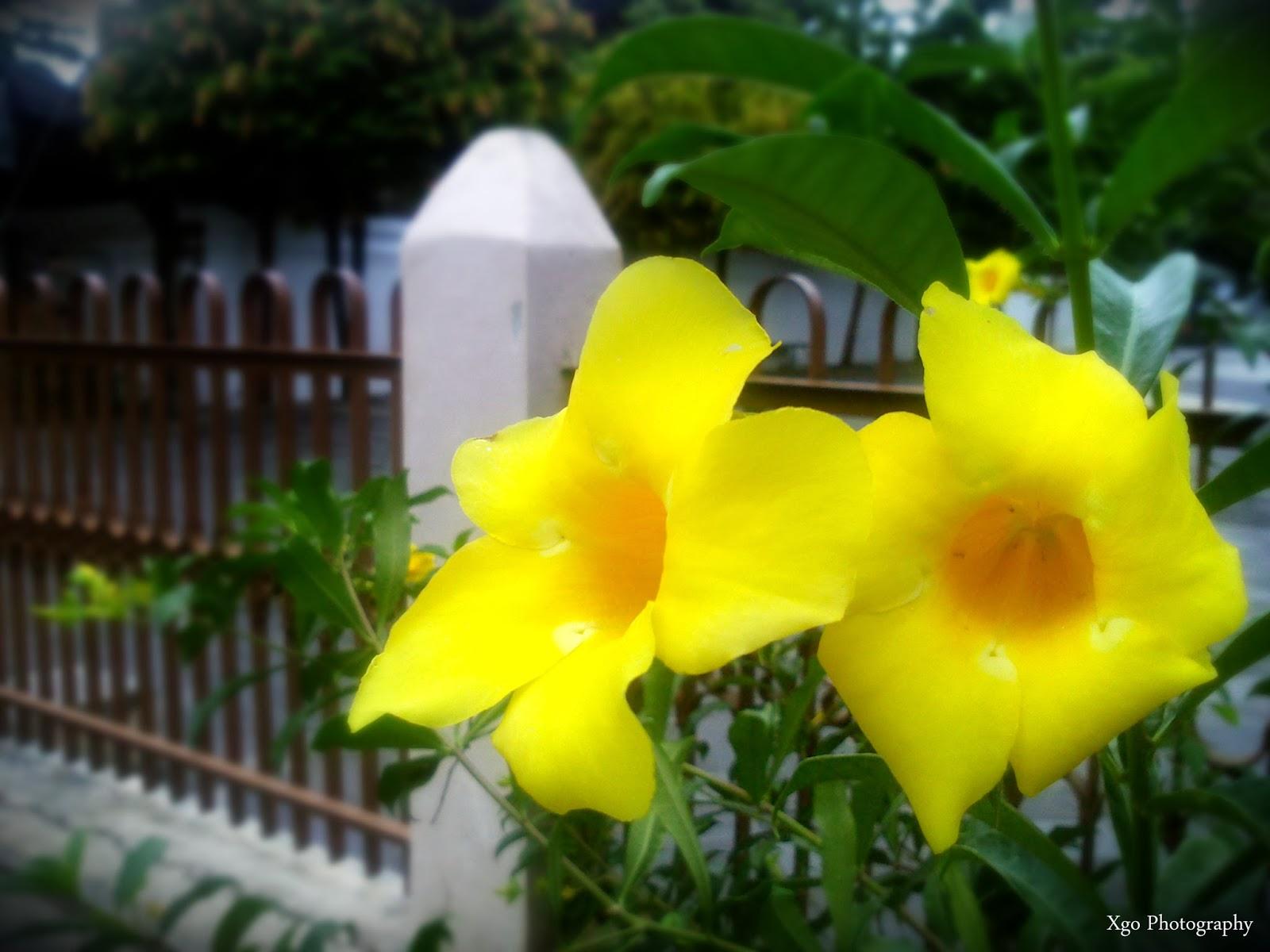 Bunga di Situs Pesanggrahan Tamansari