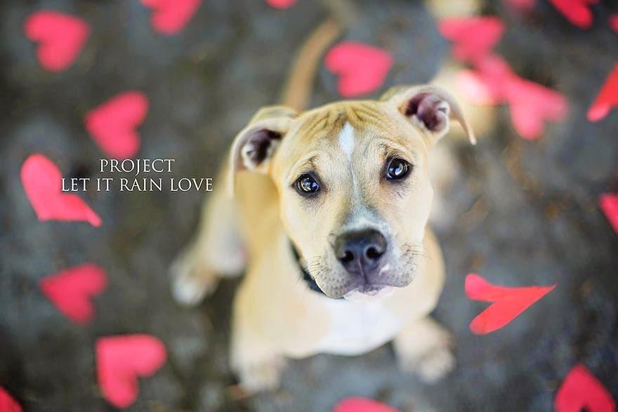 deja que llueva amor fotografias de perros