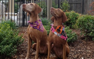 Squirrel watchers dressed for Halloween