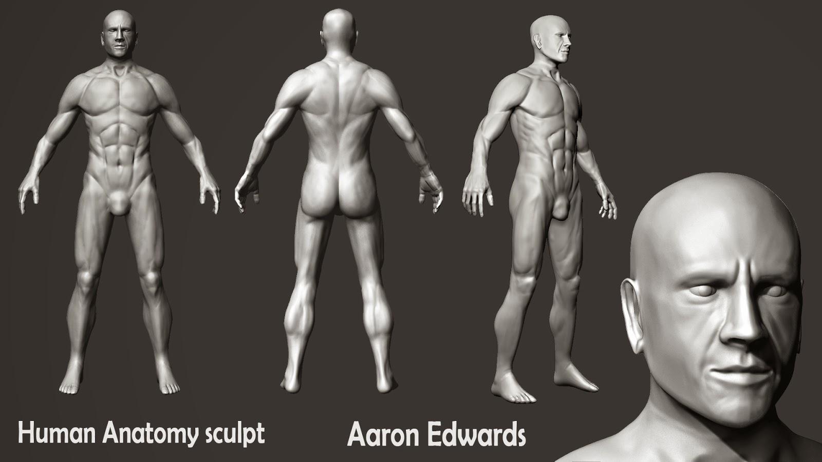 Aaron Edwards - Game Artist Blog: Male Anatomy Practice