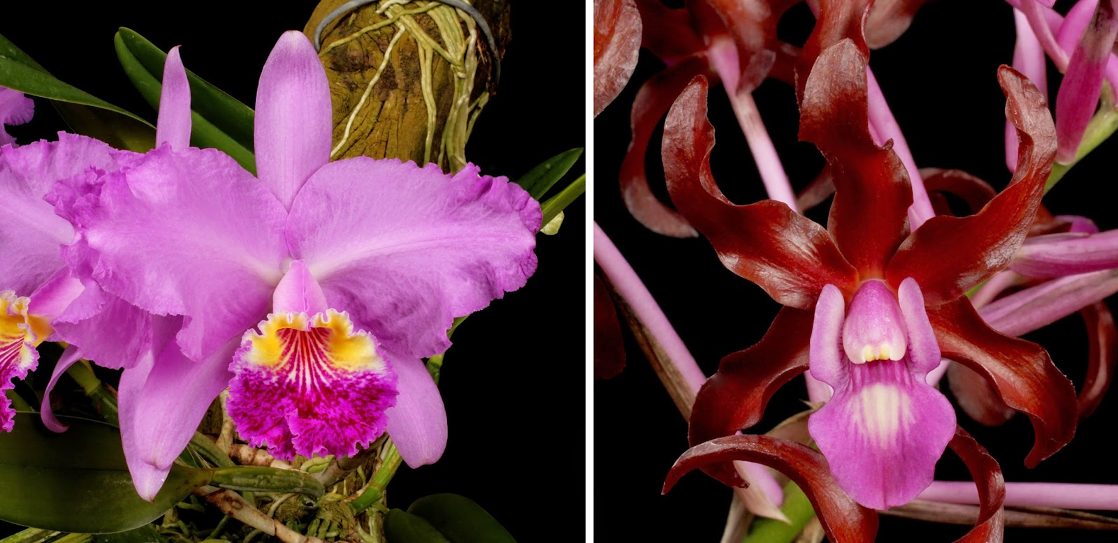 Name Orchids 016 Small Jpg Views 8421 Size 39 6 Kb