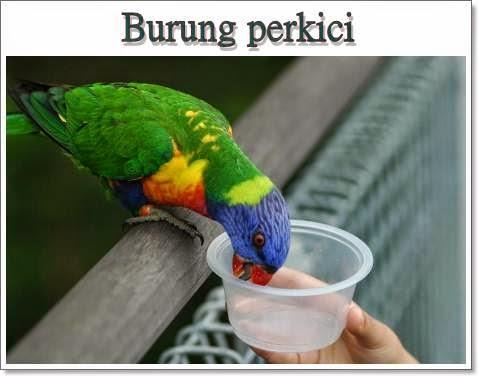 Cara menjinakkan burung yang gesit