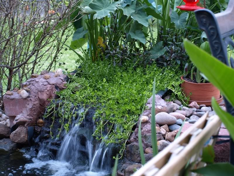 Water Filtering Plants For Ponds Of Bog Filter Enhanched Koi Pond Filtration Koi Fish Care