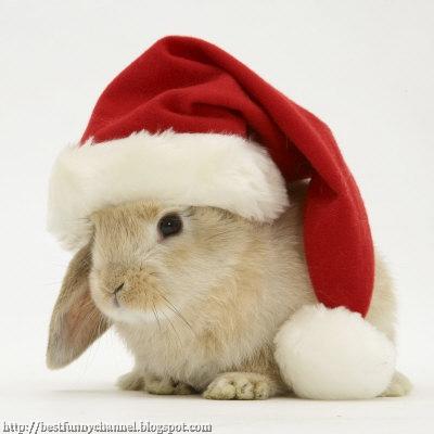 White Christmas Bunny