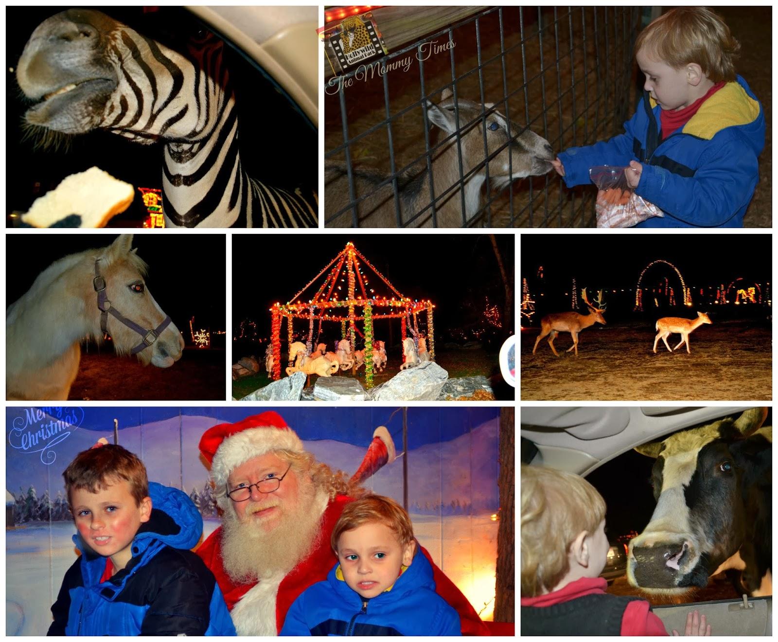 Enjoy the Holiday Lights Safari Benefit at Hollywild this season ...