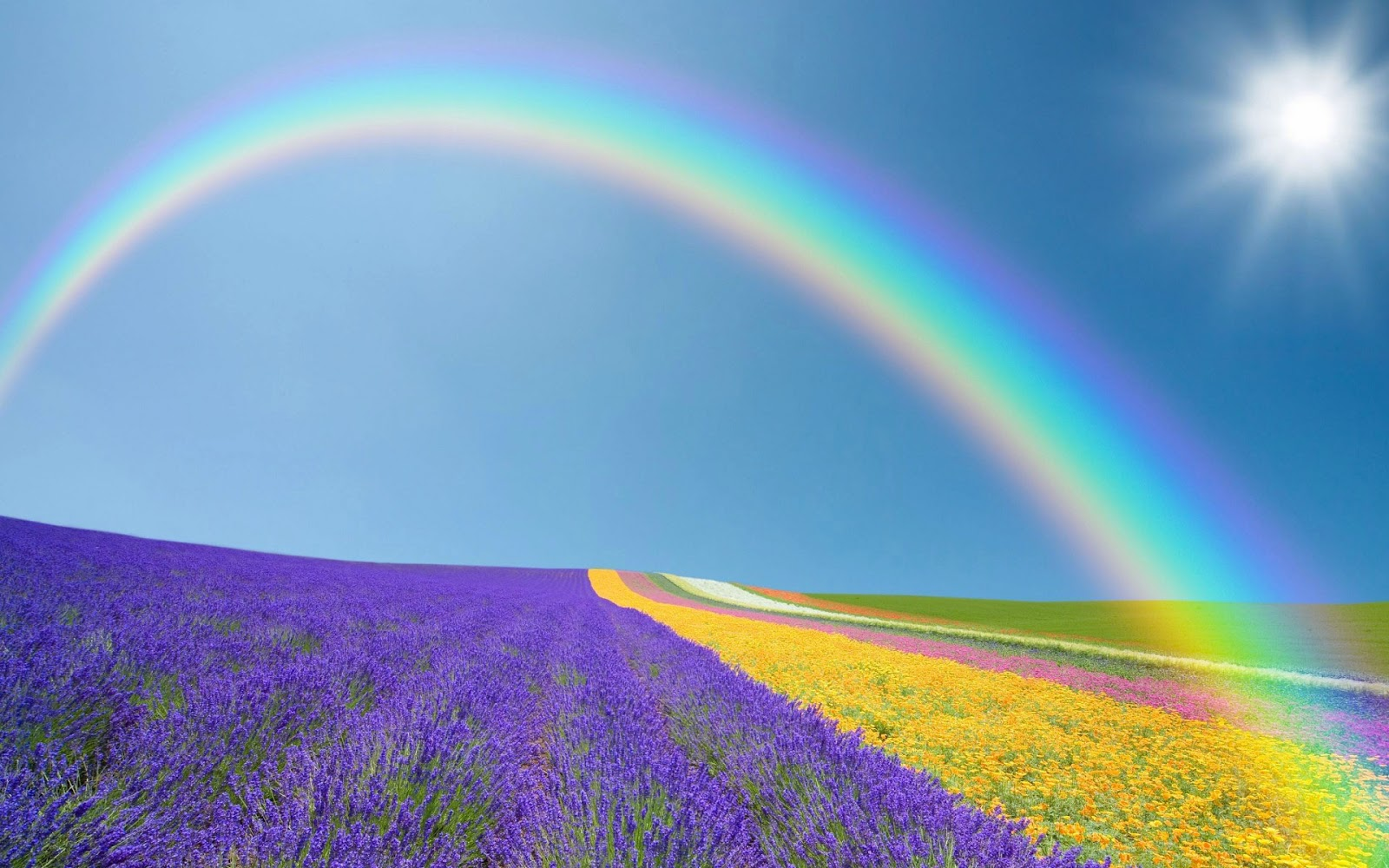 Foto met veld vol bloemen met regenboog en zon