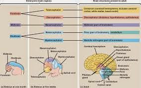 Increase brain memory naturally picture 1