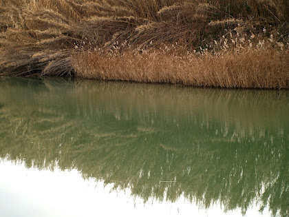 Canyís al voral del Llobregat