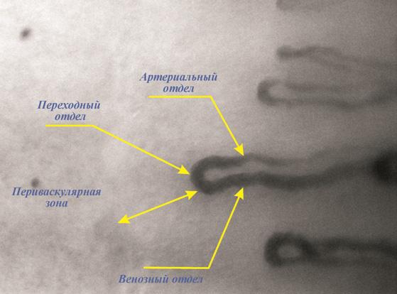 Мастер-Классы Изготовление капилляроскопия где сделать в москве труда работников