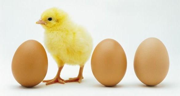 Kisaah Abu nawas : Dahulu Telur Apa Ayam