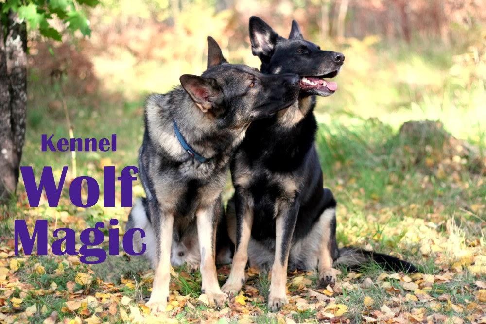Kennel Wolf Magic