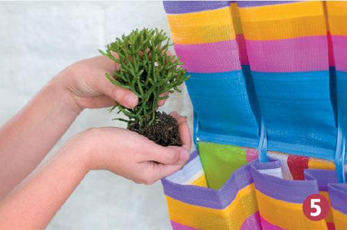 jardim vertical tecido:Gostei, postei!: Jardim em uma sapateira?