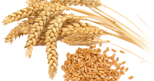 Does a Gluten Free Diet Work for Weight Loss?
