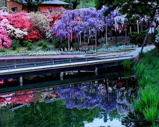arboles de fantasia al lado de un rio
