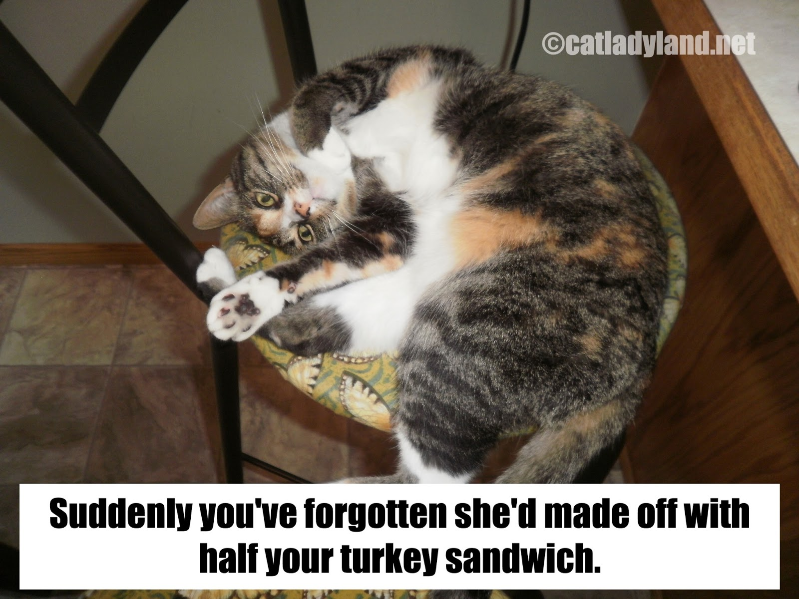 Cats are smart they know when to cute it up