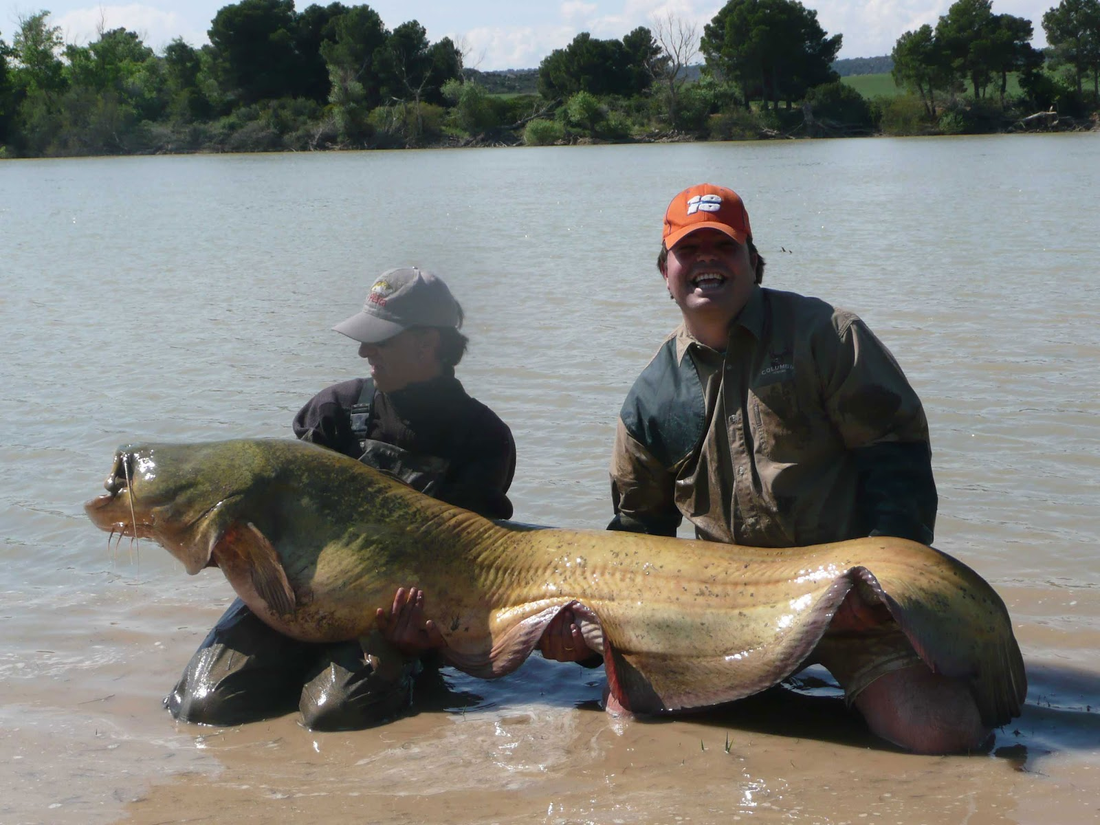 Catfish fishing guide in the river ebro catfishing and for Catfish fishing gear