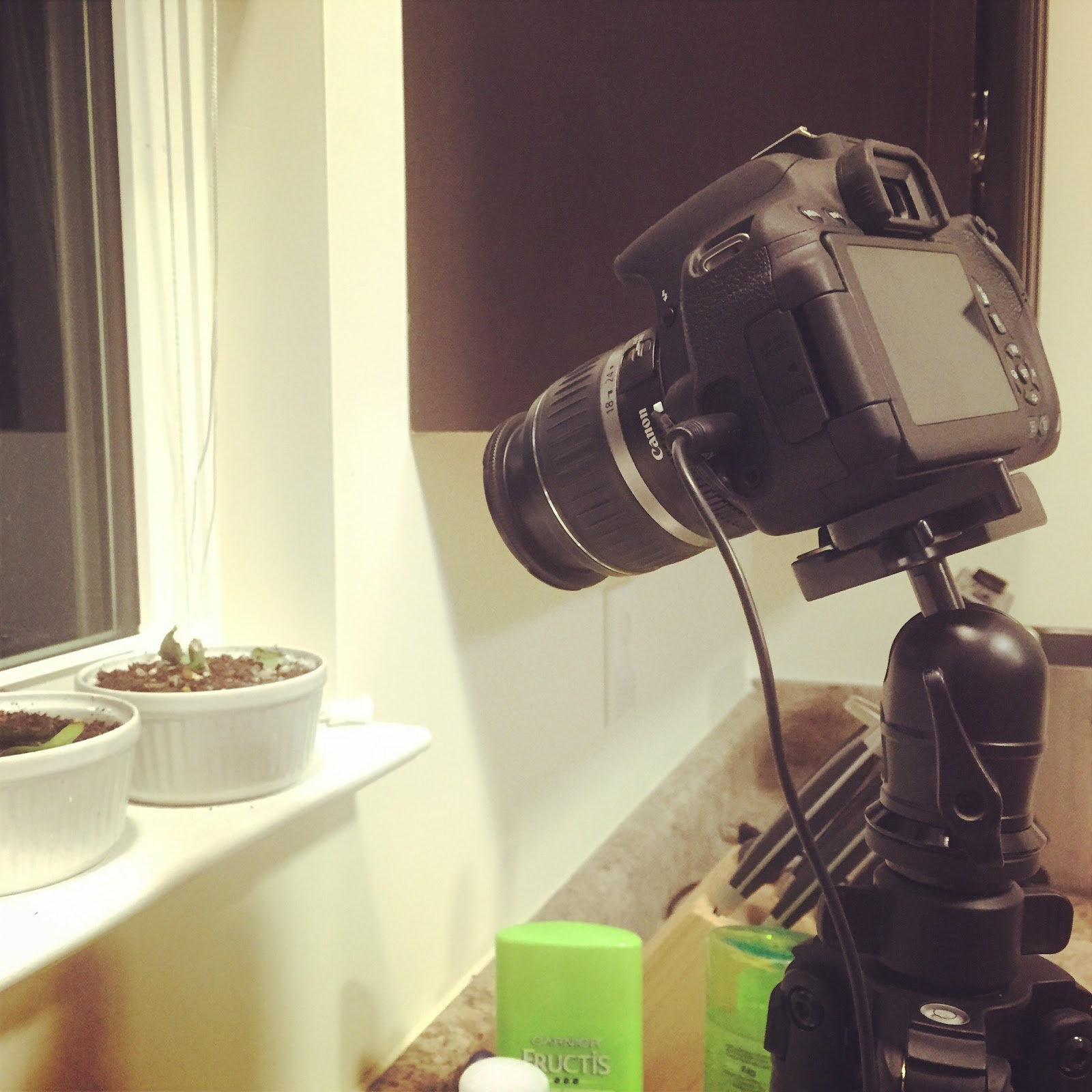 camera on tripod with succulent