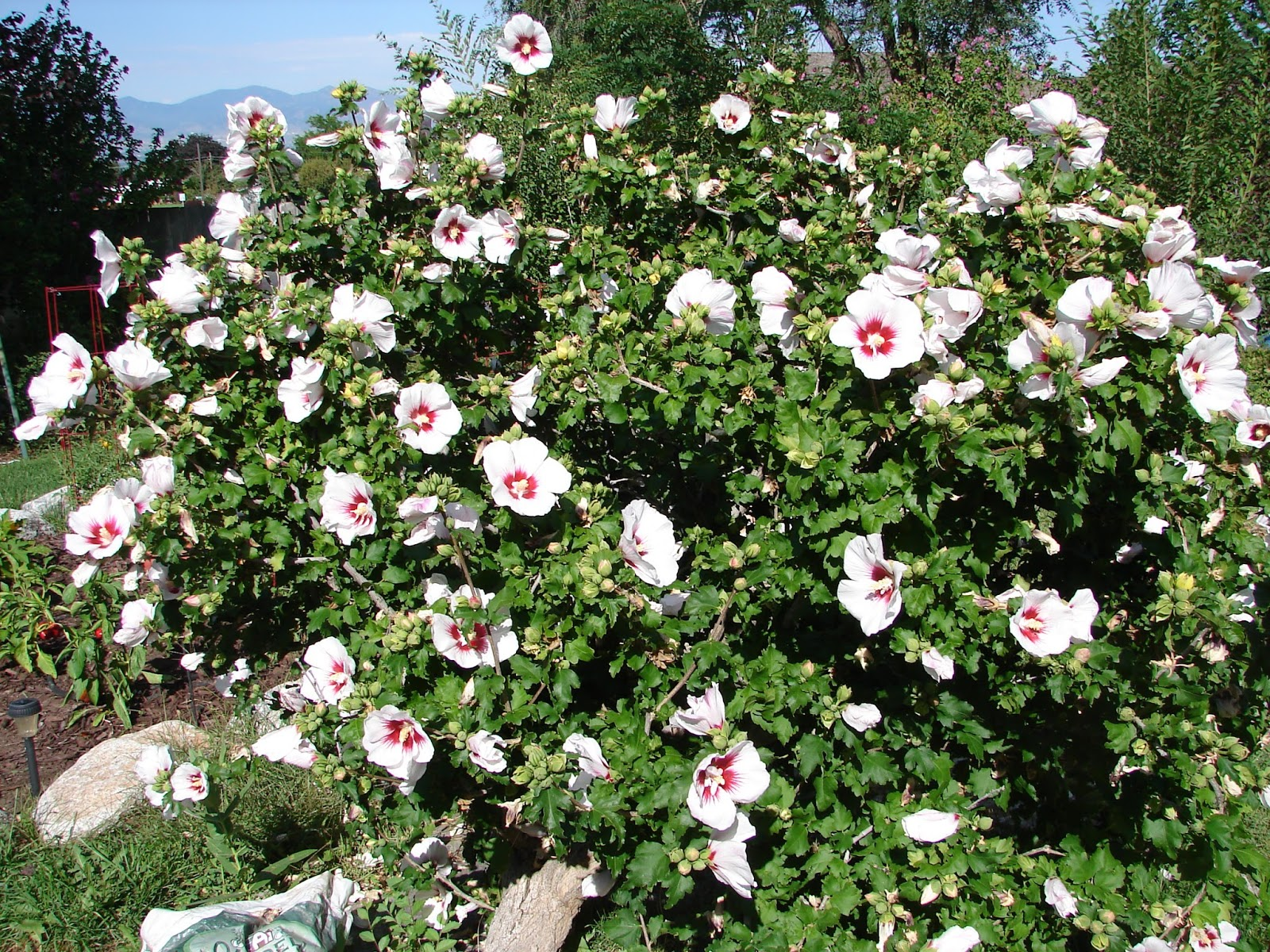 New Utah Gardener When Is The Best Time To Prune Shrubs