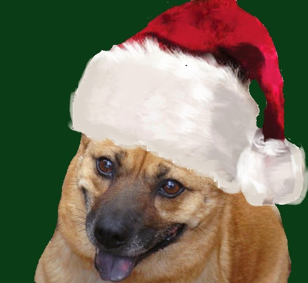 liza o connor author puppies and kittens for christmas