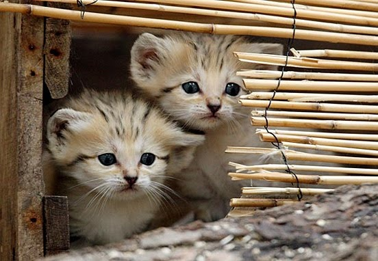 Cute little kittens hiding picture