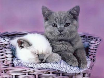 Funny-Kitten-02