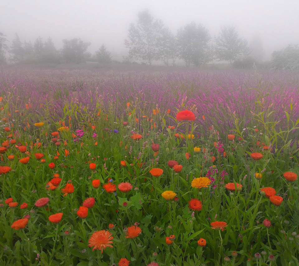 Flowers For Flower Lovers.: Beautiful Flowers Sceneries