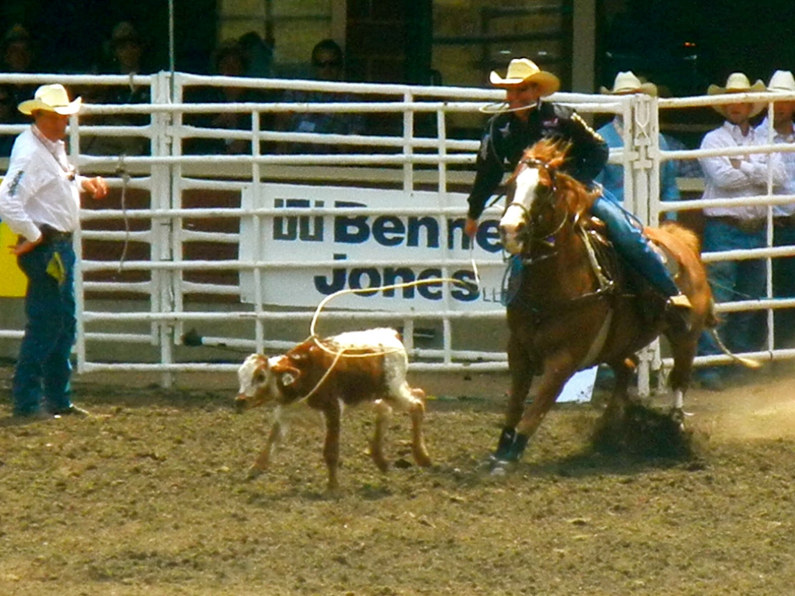 Calf Roping Wallpaper Calf Roping