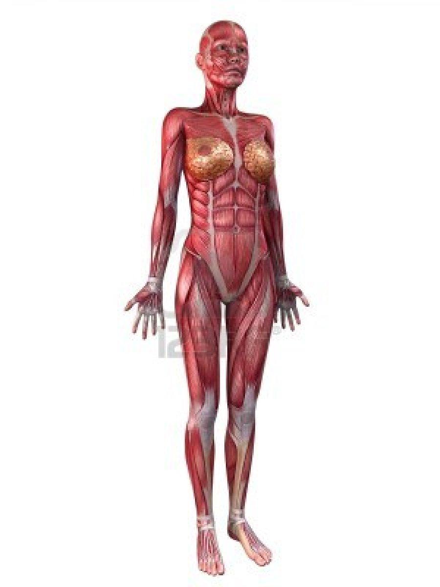 Sistema Muscular Femenino | Expresión Dos