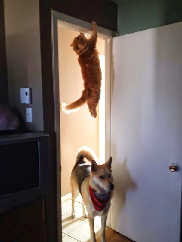cat who mastered the art of hid and seek-2