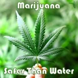 Cannabis, marijuana, safer than water