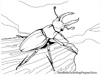 beetle realistic insect coloring pages