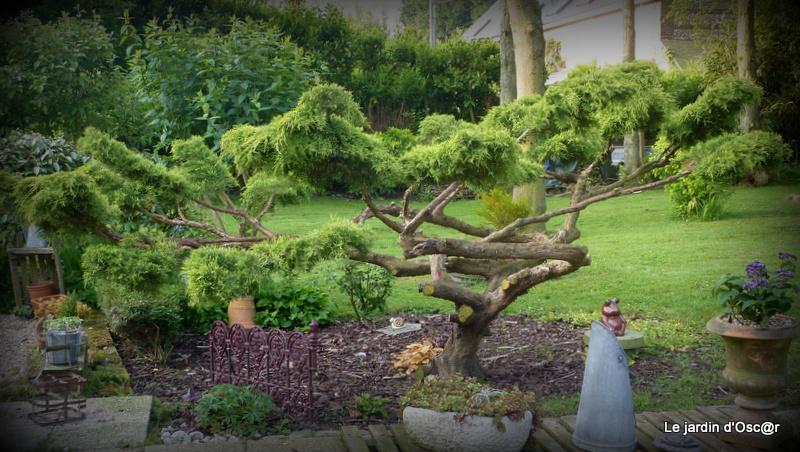 Le jardin d 39 oscar junip rus en nuages - Tailler un olivier en nuage ...