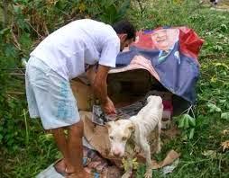 A transformação de um cachorro condenado a morte