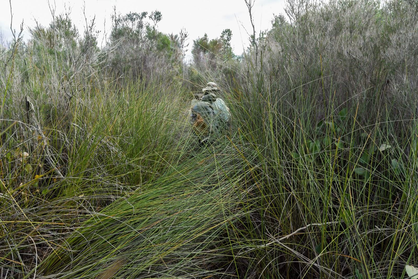 long grass near chinaman swamp wilsons promontory