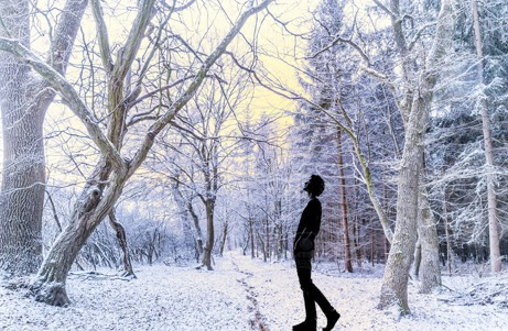 snow on trees, man looking up