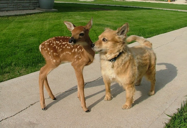 dog and deer, funny animal pictures of the week