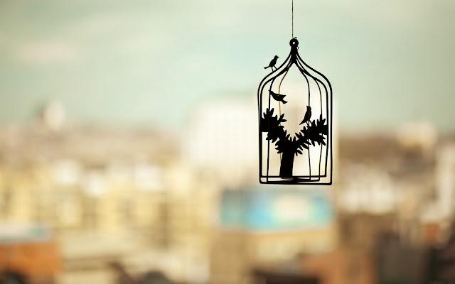 gaiola na janela