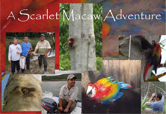A Scarlet Macaw Adventure