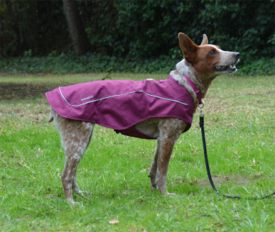 waterproof lined insulated durable dog coat