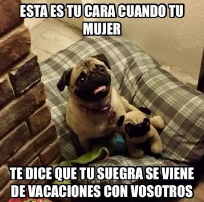 chiste humor suegra foto perro